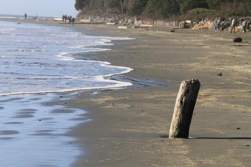 Beach Fun - Craig Carmichael