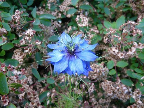 Blue Flower - Patrick Blair Roycroft