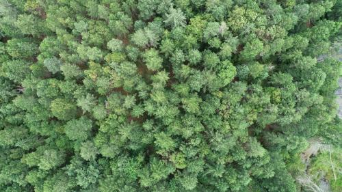 Forrest from Above - Patrick Blair Roycroft