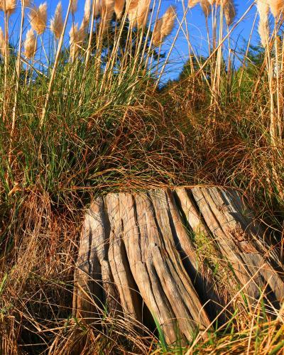 Stumped - Craig Carmichael