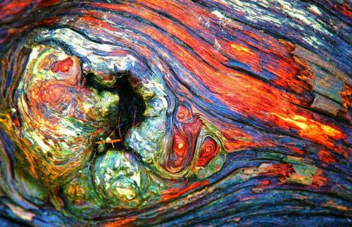 Rainbow Arbutus - Craig Carmichael