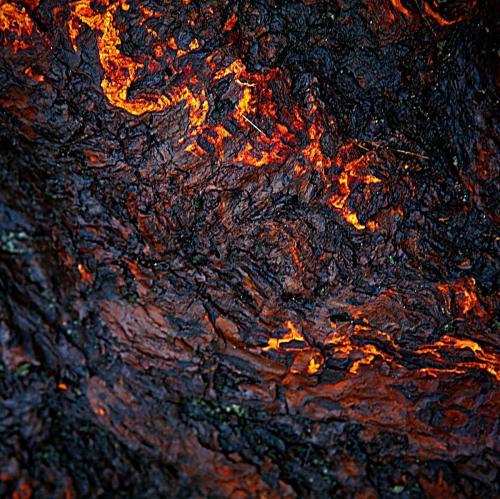 Flame Bark - Craig Carmichael