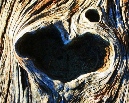 Heart Bark - Craig Carmichael