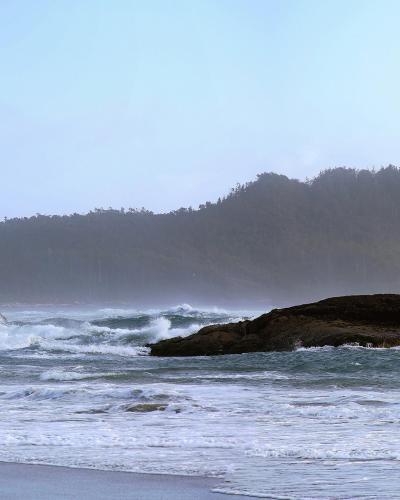 Chesteman Beach - Craig Carmichael