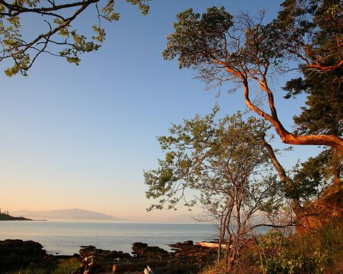 Mistaken Island - Craig Carmichael