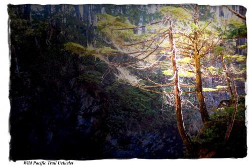 Wild Pacific Trail - Craig Carmichael